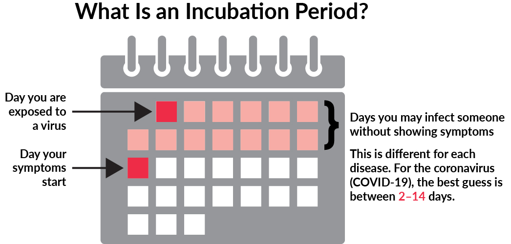 What is an incubation period?